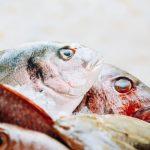 水産の営業職~求人事情・採用の秘訣と仕事内容の実態